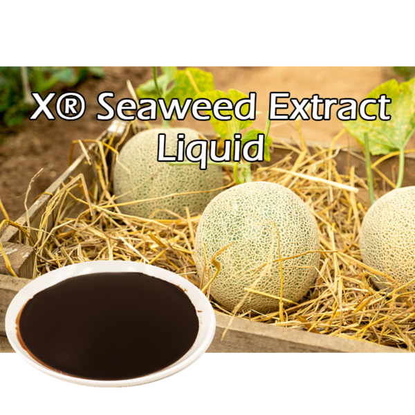 X® Seaweed Extract liquid